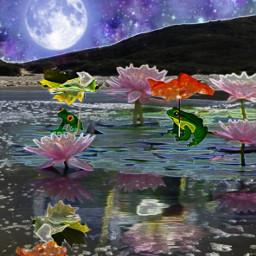 freetoedit pond frogs lotusflower umbrella ircfloating