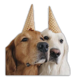 dogs animals cute aesthetic freetoedit