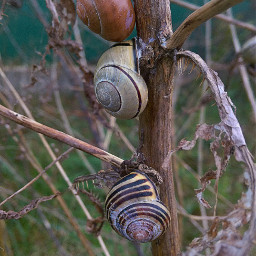 naturephotography petsandanimals autumn october2019 snails