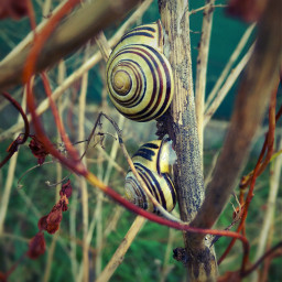 naturephotography petsandanimals snails grasslands autumn