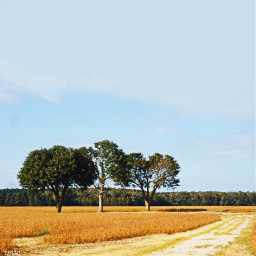 freetoedit rural myoriginalphoto