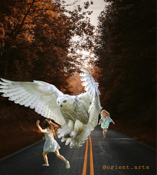 #owl #road #children #imagination #running #picsart @picsart #freetoedit