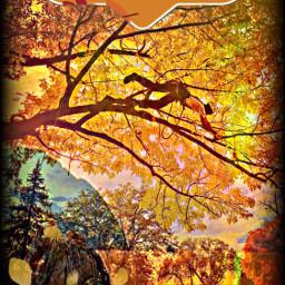 freetoedit leaves tree treeclimber october