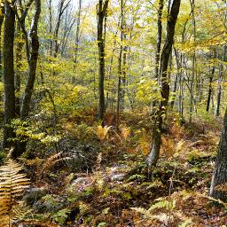 freetoedit naturephotography walkinthewoods autumnfeels
