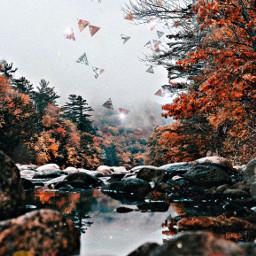 freetoedit fall fallingleaves autumnvibes autumnfeels
