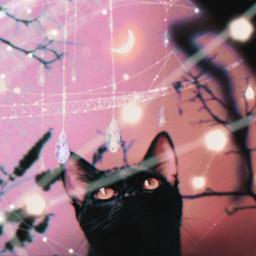 ecswarovskitodayiam swarovskitodayiam swarovski cat madewithpicsart madebyme blackcat crystals spiderweb moon halloween magic sparkling creativity