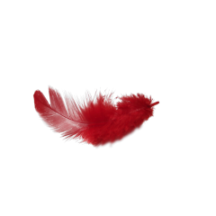 feather feathers red freetoedit