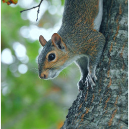 myphotography wildllife squirrel whiskers paws