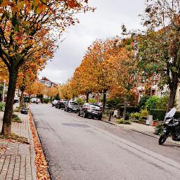 orange autumncolors autumn