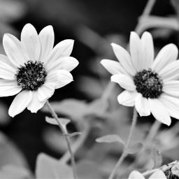 freetoedit remix remixme flowers inmyneighborhood