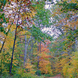 freetoedit naturephotography autumncolors