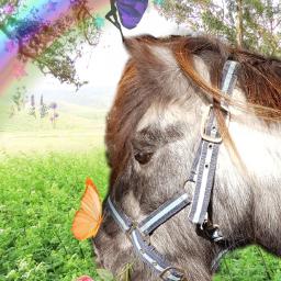 freetoedit horseey
