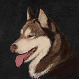 dog portrait digitalart colorpaint draw