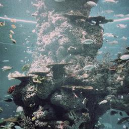freetoedit water underwater aquarium sea
