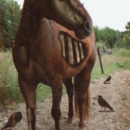 freetoedit horse bones halloweenbrushes zombie