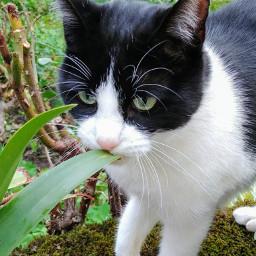 cat catsofpicsart catsphotography catslover