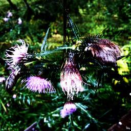 flowers wetland rain vivid purplerain