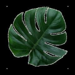 leaf greean plant freetoedit