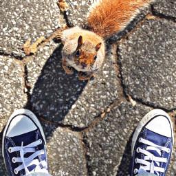 pclookdown lookdown freetoedit newyorkcity squirrel