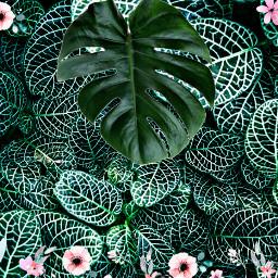leafy freetoedit srcniche niche