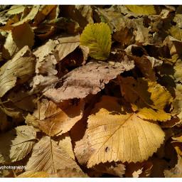 freetoedit followme autumn autumnfeels leaves