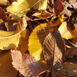 fall leaves colourful autumn