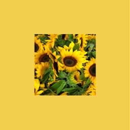 freetoedit aesthetic tumblr yellow aestheticyellow