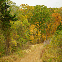 freetoedit naturephotography autmn roadtrips