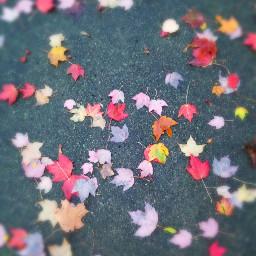 fallingleaves fallcolors autumnleaves autumnvibes autumn🍁