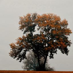 freetoedit photography atumn atumnnature fog foggyday three