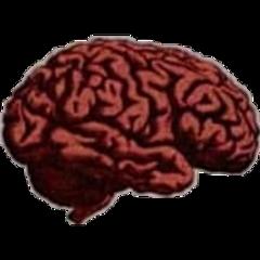 beyin akıl fikir mind brain freetoedit