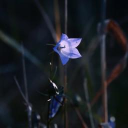 lightanddark highlight flower blossom