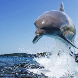 freetoedit vipshoutout delphin editing sea