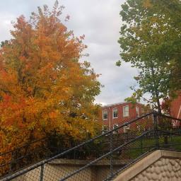 fallcolors autumncolors autumn🍁 autumn