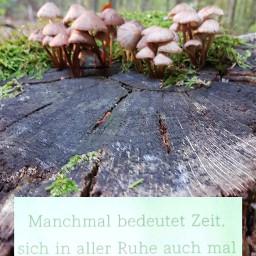 wald pilze auszeit spaziergang