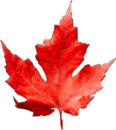 leaf challenge fall freetoedit
