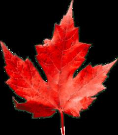 foliage leaves freetoedit