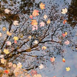 freetoedit naturephotography pond leavesfall reflections