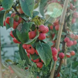 autumn autumncolors apples lovelyweather goodvibes freetoedit