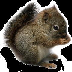 sqiurrel freetoedit