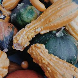 freetoedit pumpkin halloween autumn fall