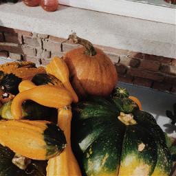 freetoedit pumpkin pumpkins fall autumn
