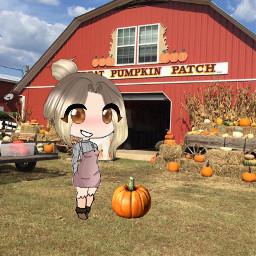 gachahalloween halloween pumpkin patch challenge freetoedit