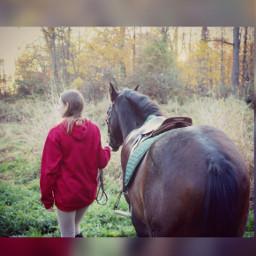 photography horse pony fall
