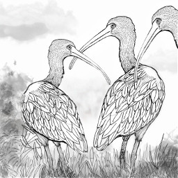 freetoedit outlineart illustration ibis birds