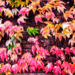 photography color colorful nature foliage