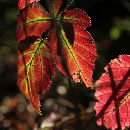 autumnleaves fall lightsandshadows moods moody freetoedit