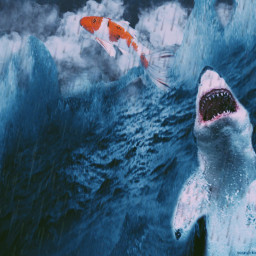 freetoedit shark sharks sea wave