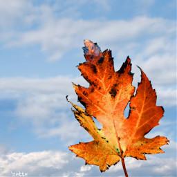 freetoedit leaf autumn myoriginalphoto