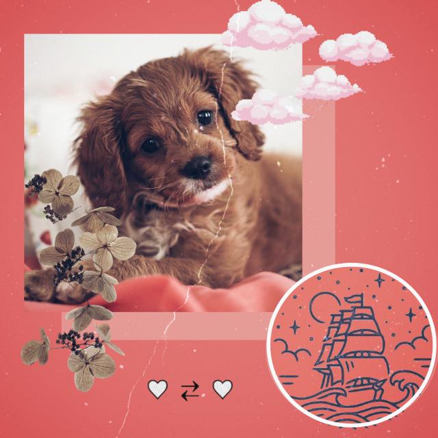 Achei bem it malia  #freetoedit#cute#pets#filhotes